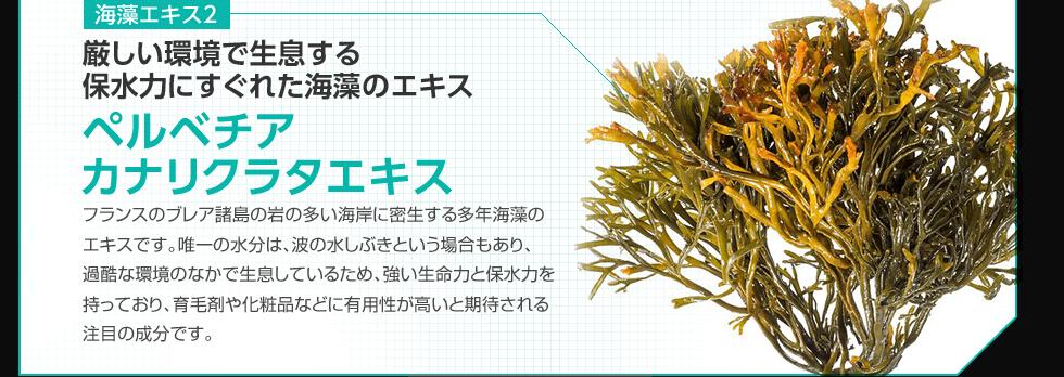 海藻エキス2 厳しい環境で生息する 保水力にすぐれた海藻のエキスペルベチア カナリクラタエキス